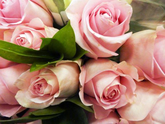 Bild Lasst Blumen sprechen
